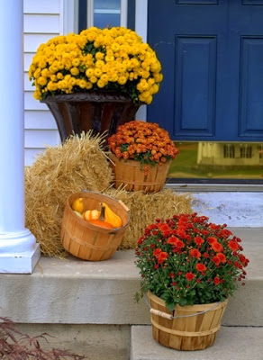 Fall Mums with wooden buckets