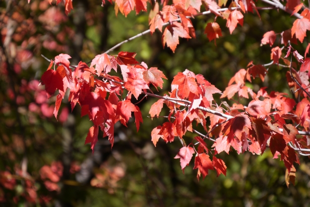 Lake Arrowhead - Following-Friends Blog