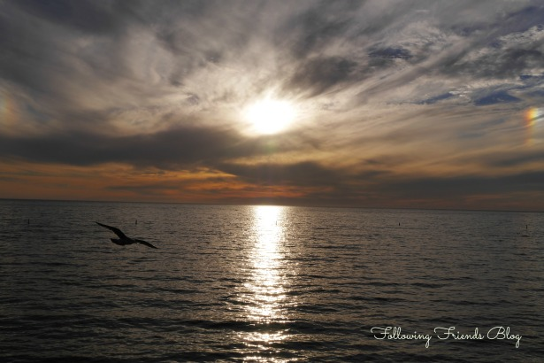Sunset at Santa Monica with Seagull