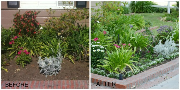 Before and After Big Flower Bed