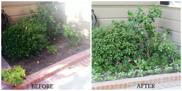 Before and After Corner Flower Bed