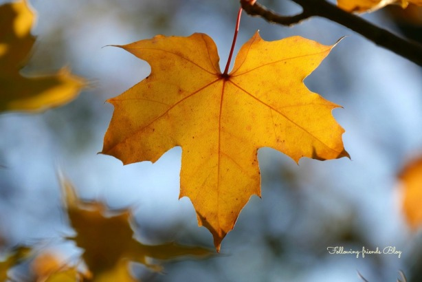 Fall Leaves Following-friends Blog