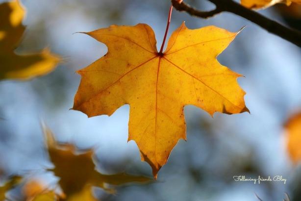 Fall Leaves Following-friends Blog